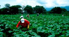 sector-de-agricultura-el-pais-hn